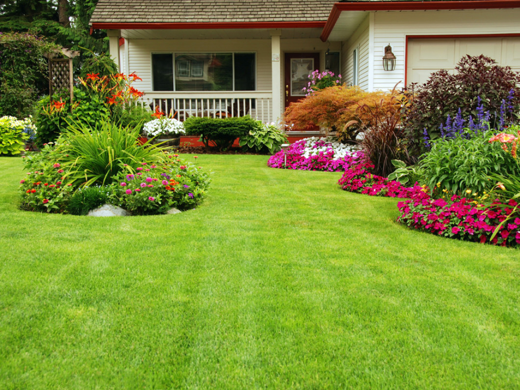 Keep Bugs Away From Your Shrubs